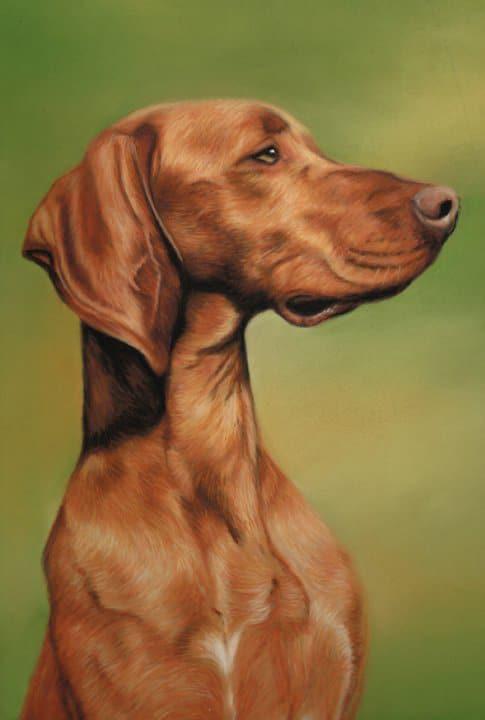 Портрет собаки Алекс